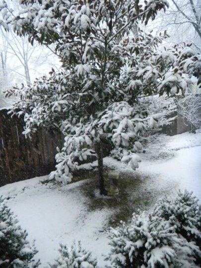 WinterWhiteWhimsy3