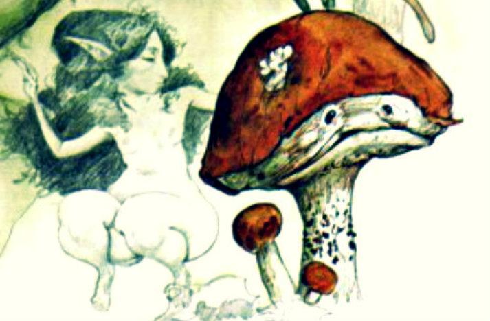brianfroudtoadstooldetail mycology