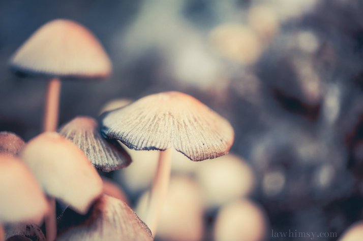 mycology magic mushroom via lawhimsy