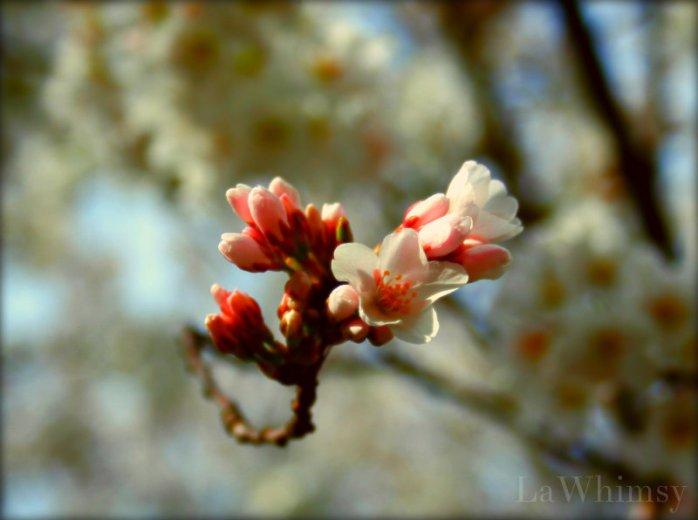 LaWhimsy Sakura 2013