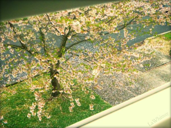 Summer Blossoms from my window by LaWhimsy