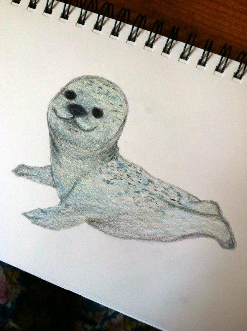 Seal Sketch 2