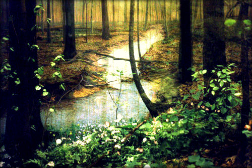 Sylvan Poetry in the woods via LaWhimsy