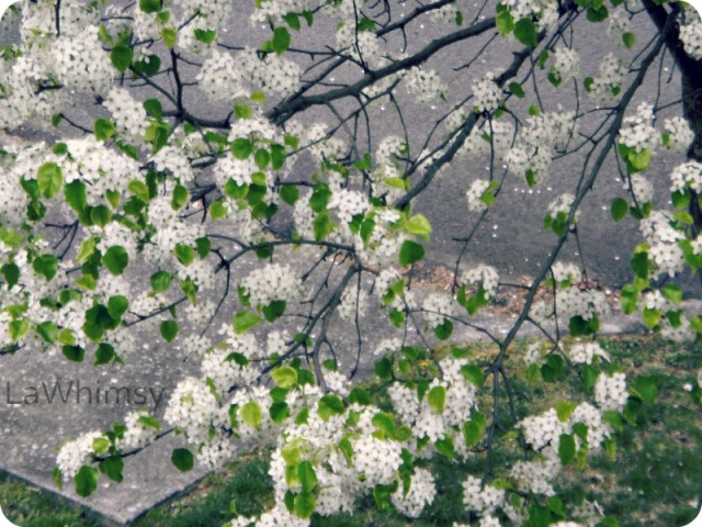 CherryBlossoms Like a Painting by LaWhimsy