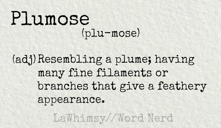 plumose-definition-word-nerd-via-lawhimsy