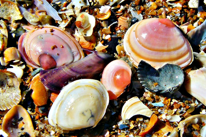 lustre in shells from a mermaid cove via lawhimsy