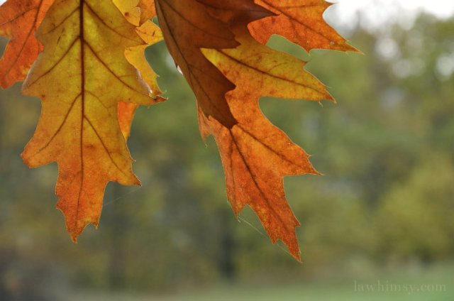 feuillemort leaves in an autumn world via lawhimsy