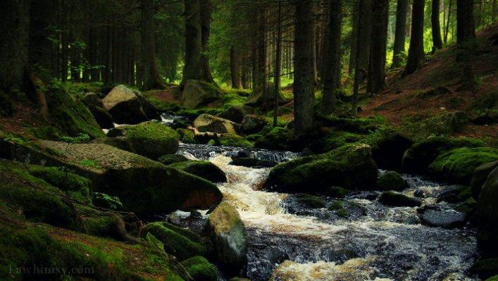 riparian paradise via lawhimsy