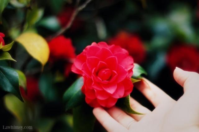aesthete pleasures of a single rose via LaWhimsy