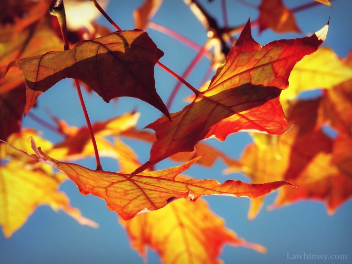 bold autumn colors in bright sunlight via Lawhimsy