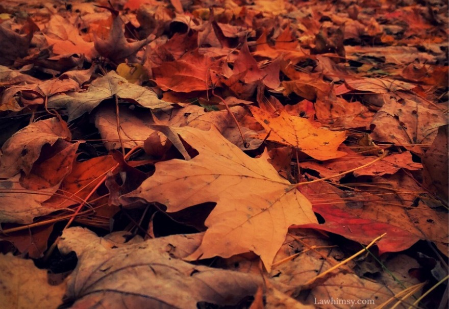 mouldering leaves autumns decay the scent of heavens fallen gateway image via LaWhimsy