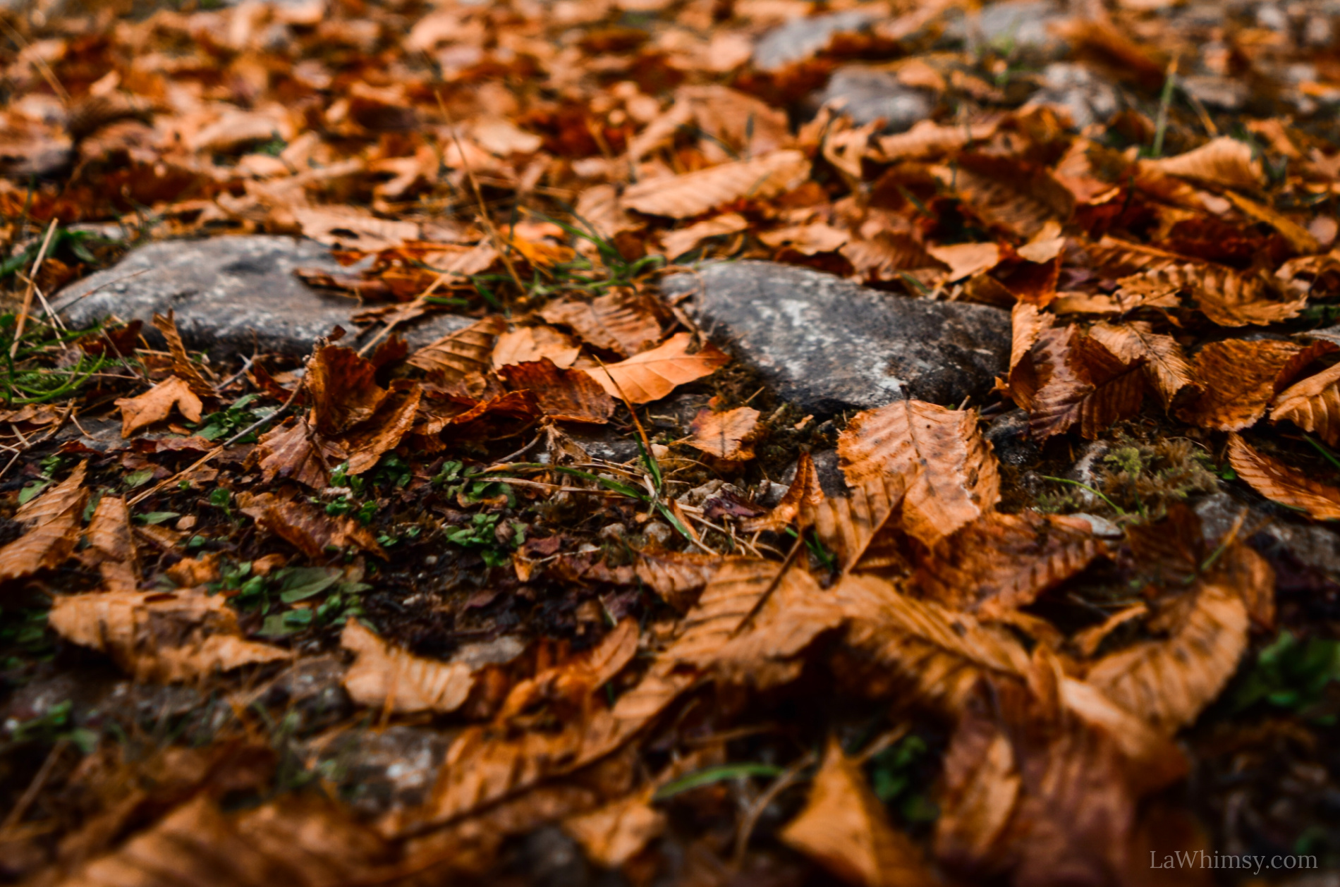 Litterfall upon the ground Autumns last best gift via LaWhimsy